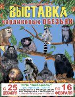 Выставка карликовых обезьян