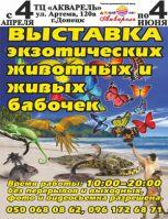 Выставка экзотических животных и живых бабочек