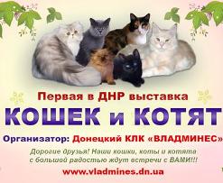 Выставка кошек «Мирные кошки Донбасса»