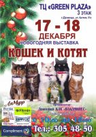 Новогодняя выставка кошек и котят