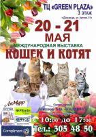 Международная выставка кошек и котят