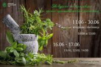 Экскурсии по коллекции пряно-ароматических растений