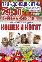 Выставка кошек и котят