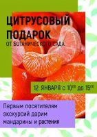 Дегустация цитрусовых