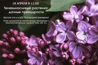 Теневыносливые растения: дачные премудрости