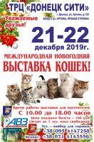 Международная новогодняя выставка кошек