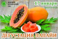 Дегустация папайи