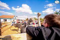 Фермерские животные и африканские страусы