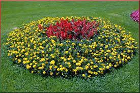 Выставка цветов ко Дню города