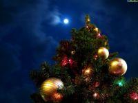 Открытие Новогодней елки!