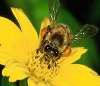 Выставку-ярмарка пчеловодческого инвентаря и продукции пчеловодства