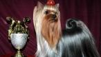 Региональная сертифицированная выставка собак «Золотая осень»
