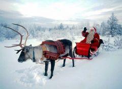Из Донецка в Лапландию откроют чартерный рейс