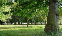 Жители Донецка и области могут помочь идеями при создании парка