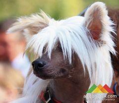 В воскресенье пройдет региональная сертификатная выставка собак
