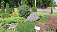 Теперь в Донецке каждый может посадить свое дерево