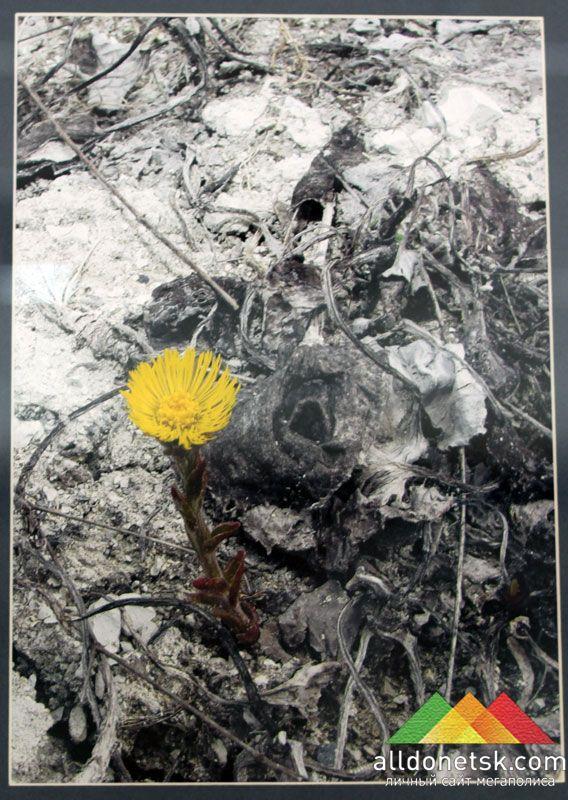 Найти каплю природной красоты на фоне мертвого пустыря - настоящий талант!