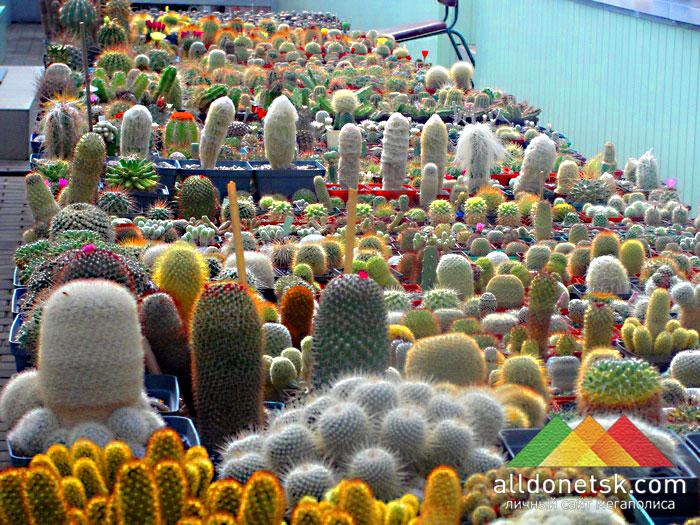 Стеллаж с кактусами