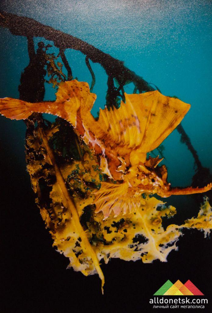 Андрей Шпатак. Японское море