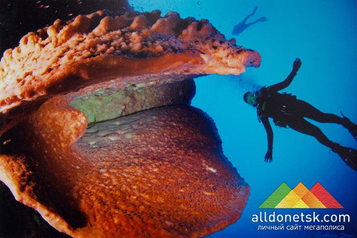 Алексей Стойда. Гигантская губка на рифе Туббатаха (риф является наследием ЮНЕСКО). Филиппины, 2012 г.