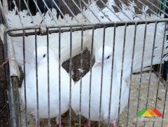 Выставка голубей и домашних птиц в Донецке