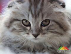 Выставка кошек. КЛК