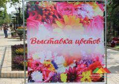Выставка цветов в Донецке (24-25.08.2019)