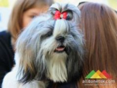 Региональная сертификатная выставка собак