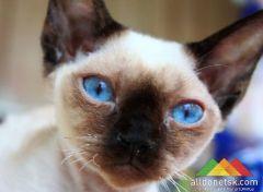 В Донецке прошла Международная выставка кошек «Новогодний серпантин»