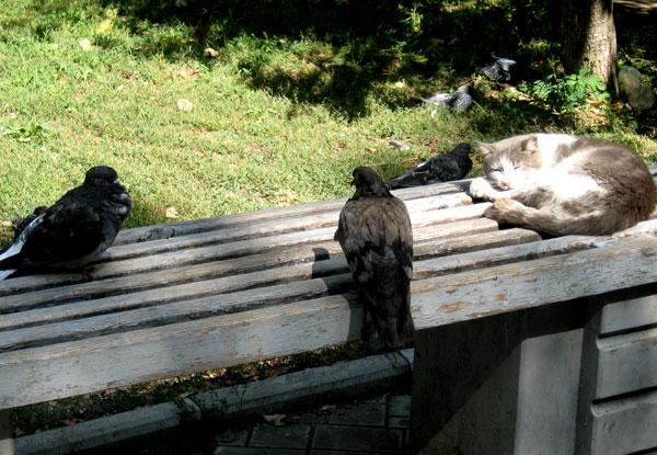 Одой из местных достопримечательностей в районе кинопалаца Звездочка стал самый невозмутимый кот в мире