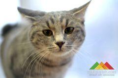 Выставка кошек в Донецке. Кубок Hills