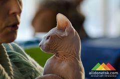 Пушистые красотки и лысые хвосты: выставка кошек в Донецке